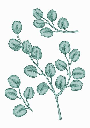 Set of eucalyptus branches on green background. Hand drawn botanical illustration with contour lines in vector. Colorful floral elements fot textile and wallpaper.