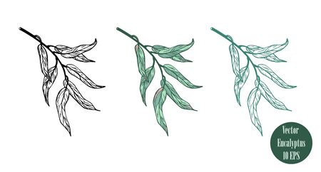 Set of colorful eucalyptus branches  isolated on white background. Hand drawn botanical illustration with green contour lines. Stock vector illustration. Floral elements fot textile and wallpaper.