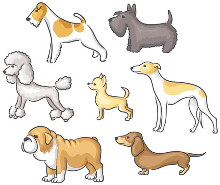 breeds: Set of cartoon dogs of different breeds Illustration