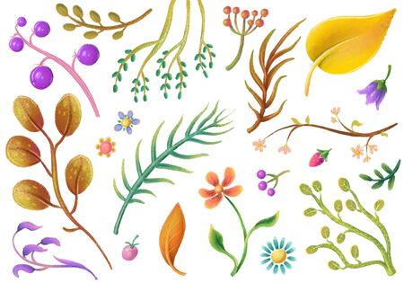Set of isolated pastel plant elements, flowers, leaves, floral clipart,
