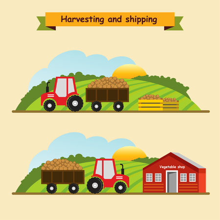 germination: Potatoes .Collection and delivery of the crop. Vector illustration.