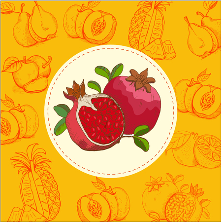 apples and oranges: Pomegranate. Fruit. Vector illustration. The fruit is hand-drawn. Hand drawn vector illustration.