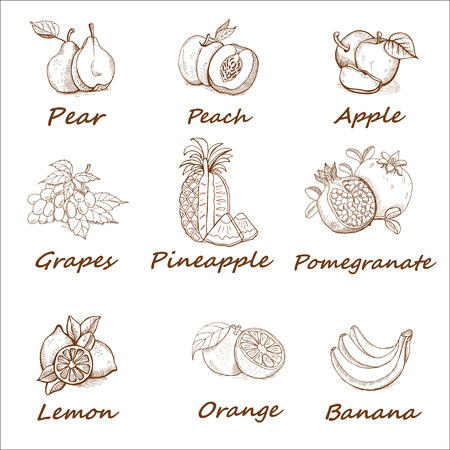 handdrawn: Collection, monochrome hand-drawn set of fruit.