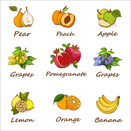 Collection, set of hand drawn fruits.