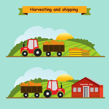 Carrots. Collection and delivery of the crop. Vector illustration.