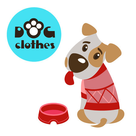 Dog in clothes. The Jack Russell Terrier. Clothing for dogs. Vector illustration. Isolated on a white background.