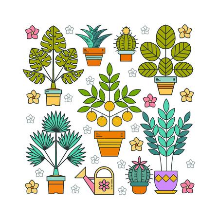 鉢植えの植物。鉢花。正方形の形をした鉢花のアレンジメント。白い背景上に分離。  イラスト・ベクター素材