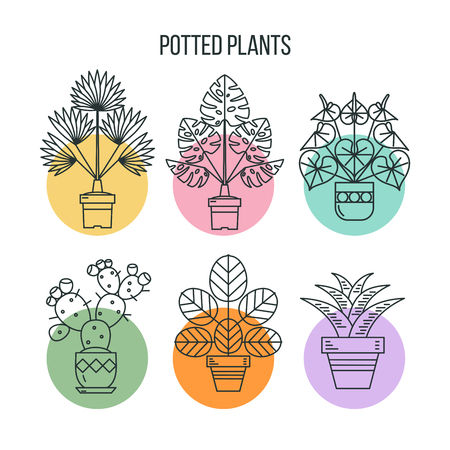 Potted plants. Isolated linear icons in colorful circles on a white background. Illustration