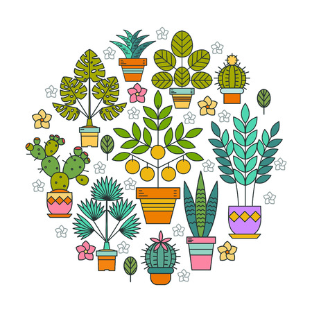 鉢花。鉢植えの植物。円の形をした鉢花のアレンジメント。白い背景上に分離。  イラスト・ベクター素材