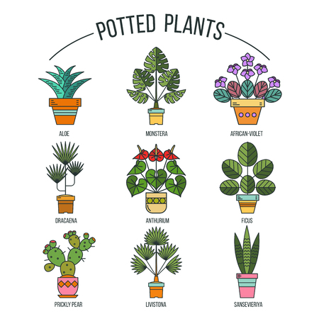Flowers in pots. Potted plants. Set of vector images. Isolated on white background.