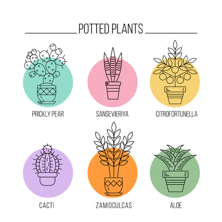 Flowers in pots. Potted plants. Set of vector line icons. Isolated on white background