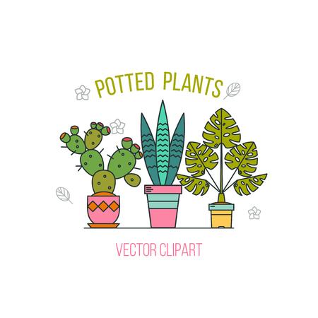 鉢植えの植物。白い背景の上の鍋で花のアレンジメント。