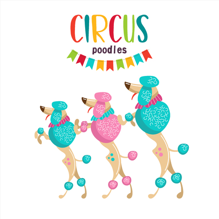 Circus. Vector illustration. Performing poodles. Isolated on a white background.