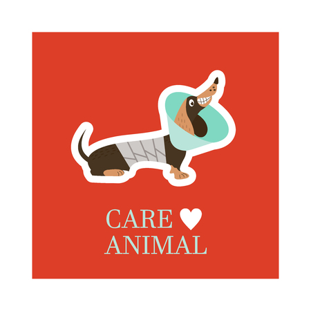 Veterinary care. Care of animals. Cute dog Dachshund with a bandage in a veterinary collar. The emblem of the clinic. Vector illustration of a sticker.