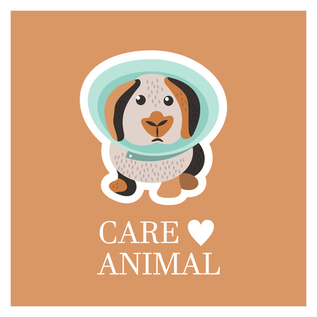 Veterinary care. Care of animals. Sick rabbit in a veterinary collar. The emblem of the clinic. Vector illustration of a sticker.