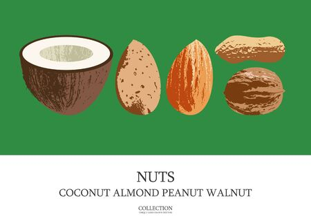 Set of delicious and healthy nuts. Coconut, almonds, walnuts, peanuts. Vector illustration with unique hand drawn texture