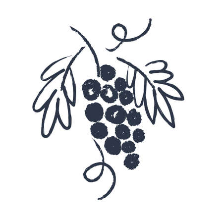 Hand drawn sketch. Grape. Vector illustration on a white background.