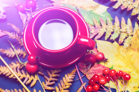 A hot Cup of tea surrounded by autumn leaves. The concept of autumn Stock Photo