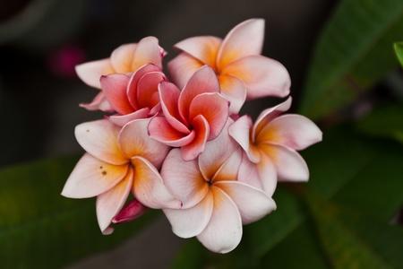 flower color is very beautiful Standard-Bild