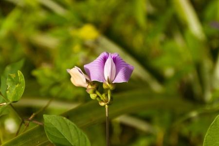 colore del fiore � molto bello Archivio Fotografico