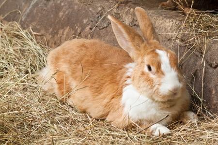 Bunny, il coniglio