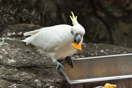 colorful parrot photo