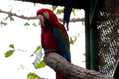 pappagallo colorato Archivio Fotografico
