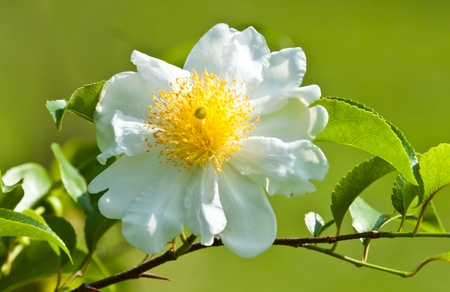 the beautiful flowers photo