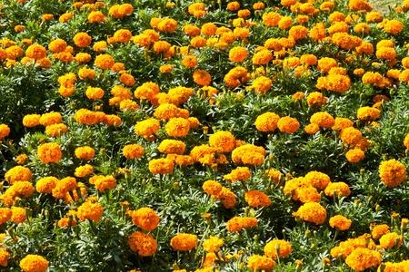 i bellissimi fiori Archivio Fotografico