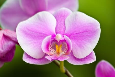beautiful purple orchid Stock Photo - 11949536