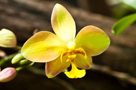 beautiful purple orchid Stock Photo - 12109983