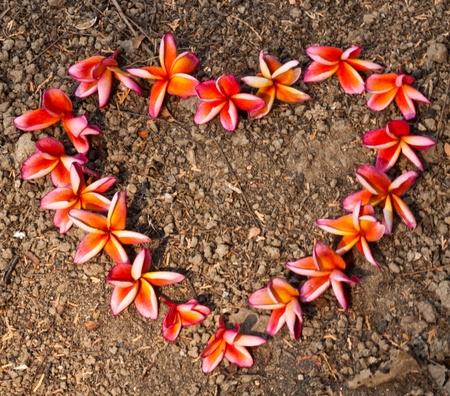 frangipani,Plumeria flowers Stock Photo