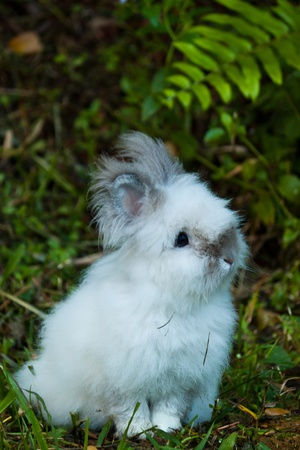 Cute Rabbit in Grass photo