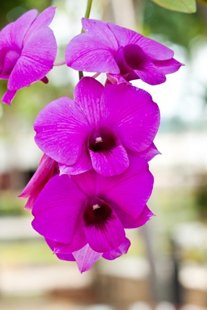 beautiful purple orchid Stock Photo - 12890624