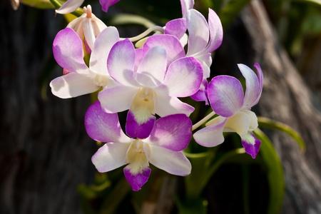 beautiful purple orchid Stock Photo - 12890626