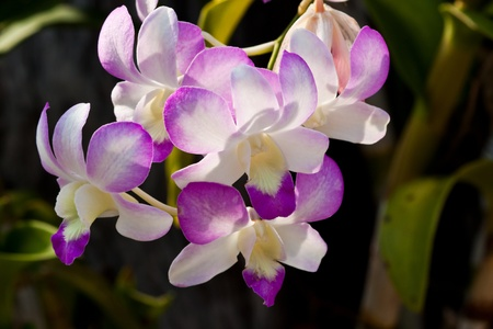 beautiful purple orchid Stock Photo - 12890605