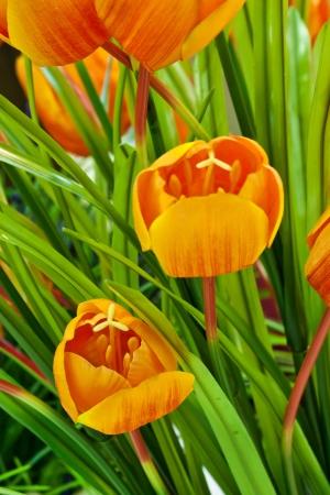 beautiful spring flowers Stock Photo - 14499228