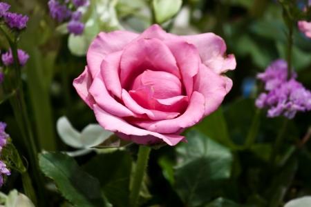 beautiful spring flowers Stock Photo - 15330617