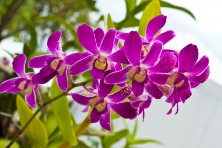beautiful purple orchid Stock Photo - 15330575