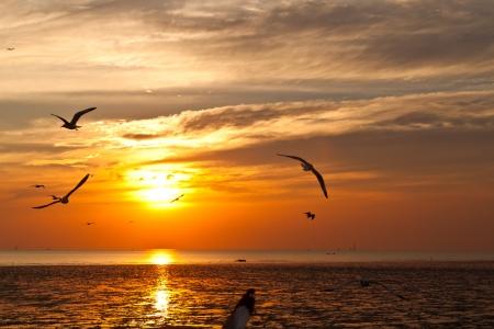 dieren: meeuw met zonsondergang op de achtergrond