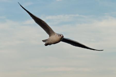 seagull Stock Photo - 17358965