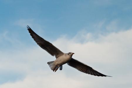 seagull Stock Photo - 17358977