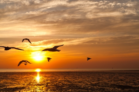 seagull with sunset in the background photo