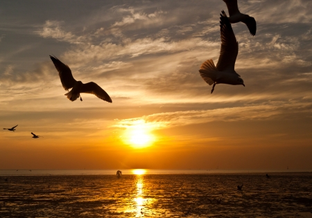 seagull with sunset in the background Stock Photo - 17597228