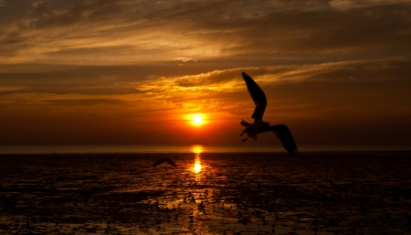 seagull with sunset in the background Stock Photo - 17930877