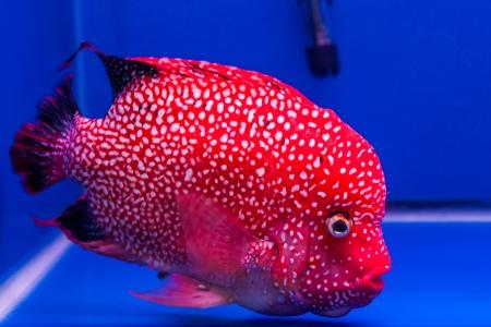 fish native Stock Photo - 20286254