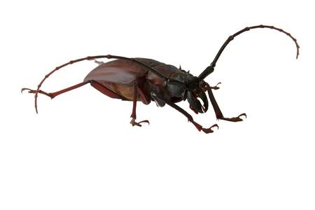 scarab: Scarab