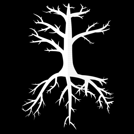 bough: Trees with dead branches and roots