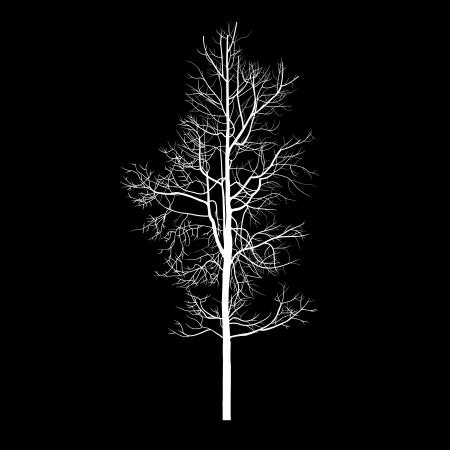 Alberi con ramo morto