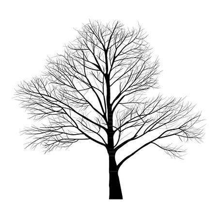 Trees with dead branch Stock Vector - 23866090